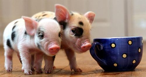mơ thấy lợn đánh con gì