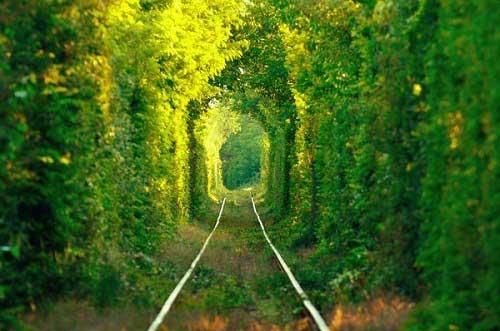 mơ thấy rừng rậm