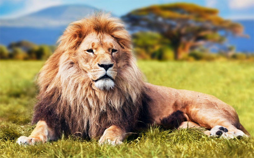 Mơ thấy sư tử