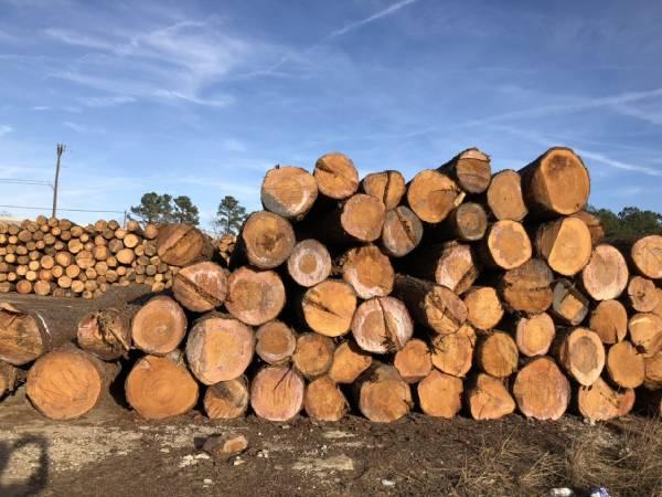 Mơ thấy gỗ là điềm báo lành hay dữ?
